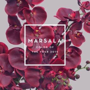 Orquídea phaleonopsis color del año marsala
