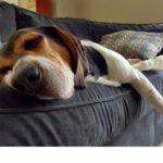 Sofás: Como limpiar un sofá de tela